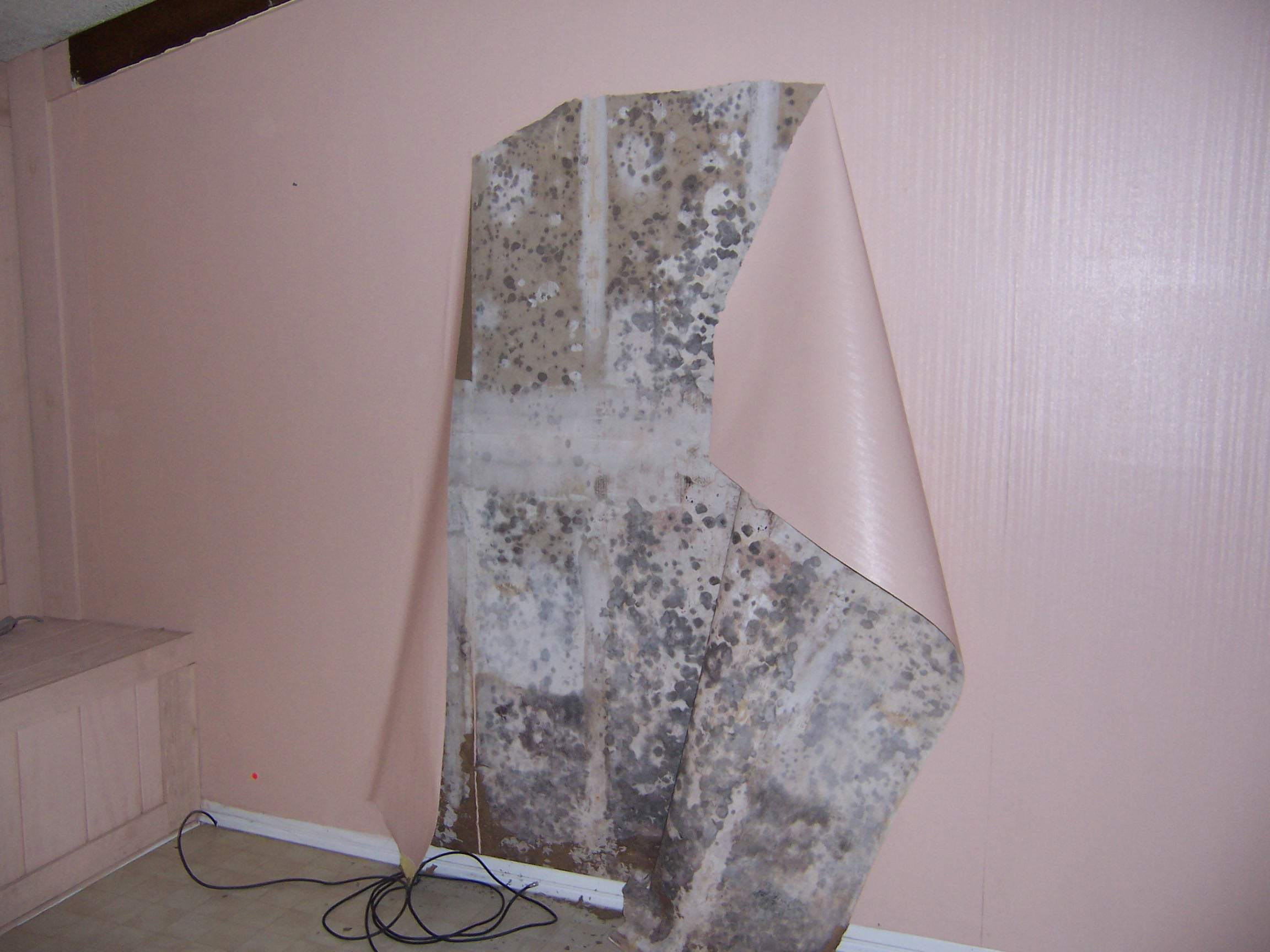 Mold Inspection and Testing Jacksonville Fl